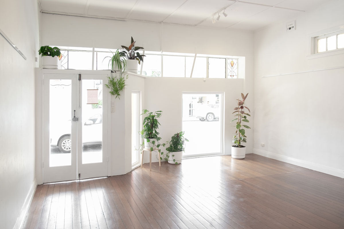 Small Works Gallery Empty Space with window and plants