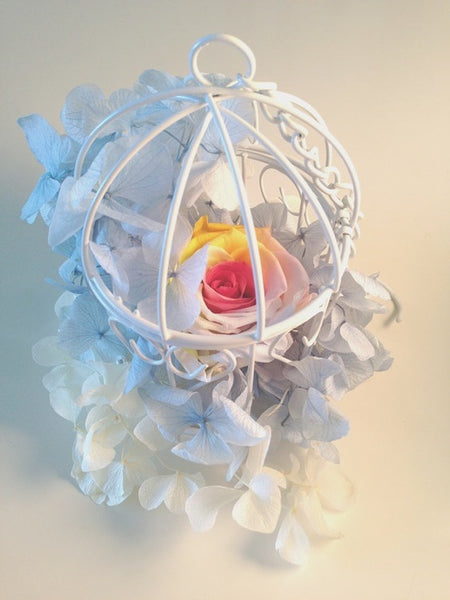 Preserved Flower Rose Cage - Rainbow Rose