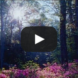 Video Meditations DVD MP4 - Willowgreen