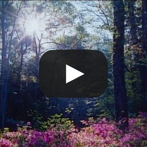 Awaken to Hope: Affirming Thoughts to Begin Your Day — The Video