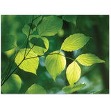 Lovely sunlit leaves offer support at a death or are blank inside.