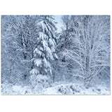 Lovely snowy woods for holidays or blank inside.