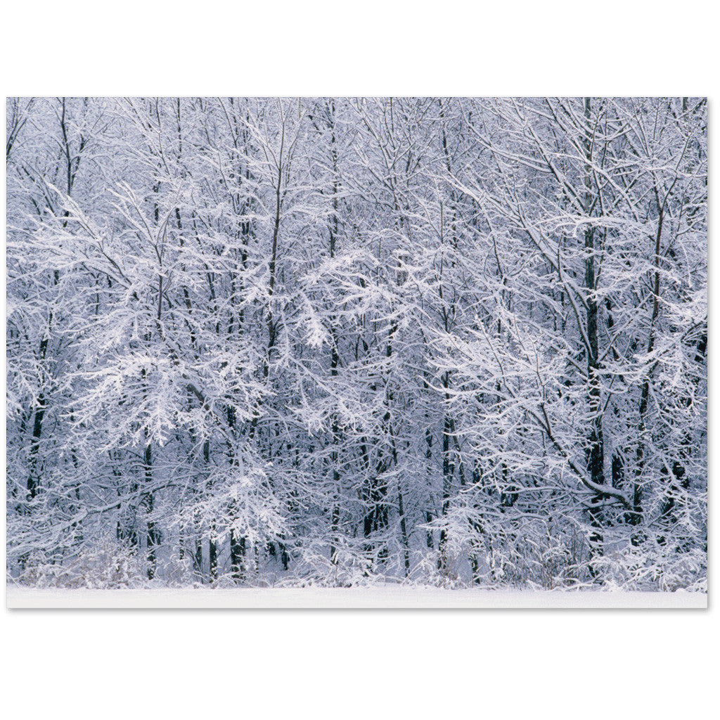 Snowy woods image with a holiday greeting or blank inside.