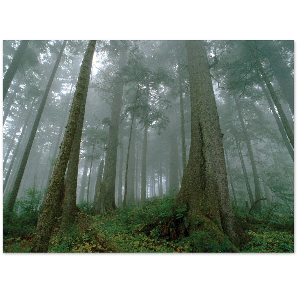 Beautiful forest in fog note cards express sympathy or are blank.