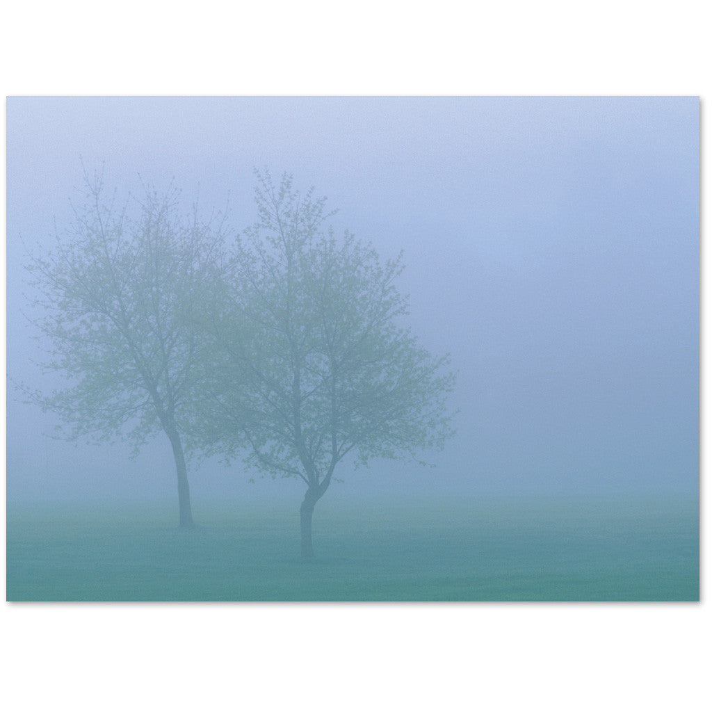 Two lone trees in the fog express sympathy or are blank.