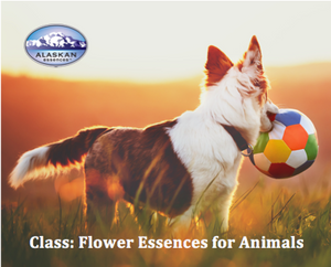When and how to use Flower Essences for Animals