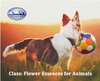 Recording May 22nd 2020: When and how to use Flower Essences for Animals