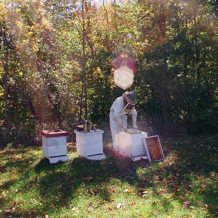 Q&A With Local Beekeeper Dennis Edell