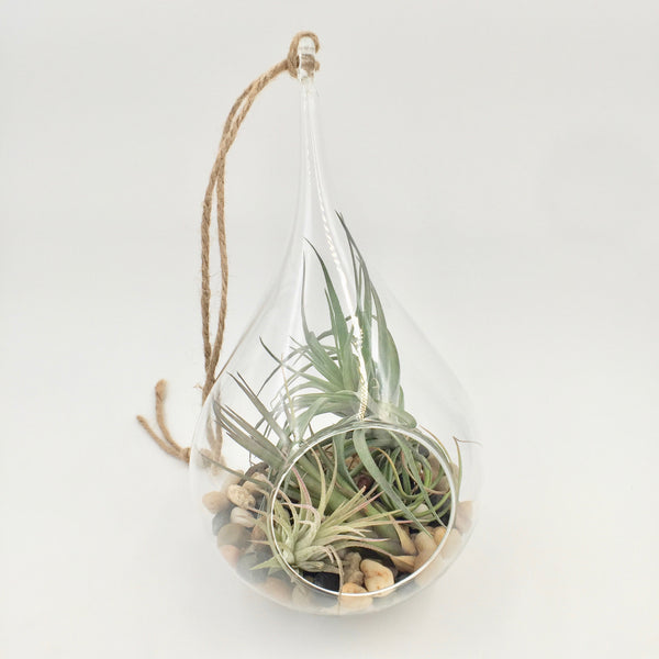 Terrarium - Hanging Glass