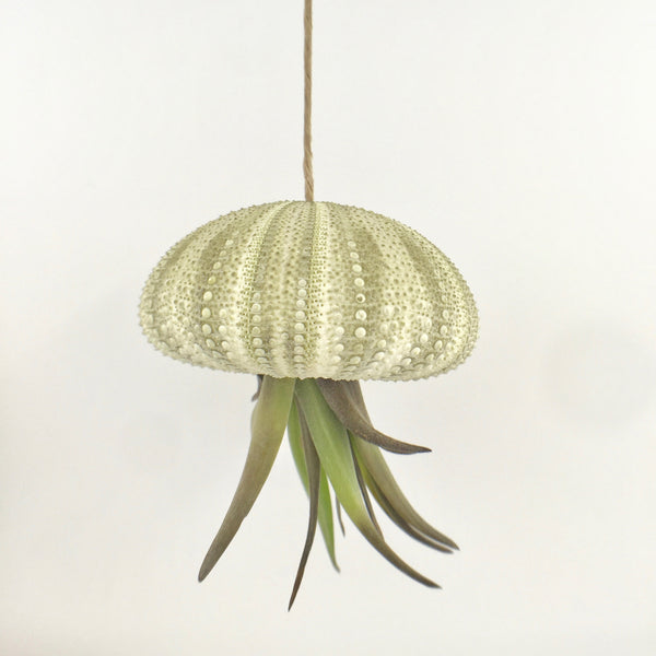 Jellyfish AirPlant - Small