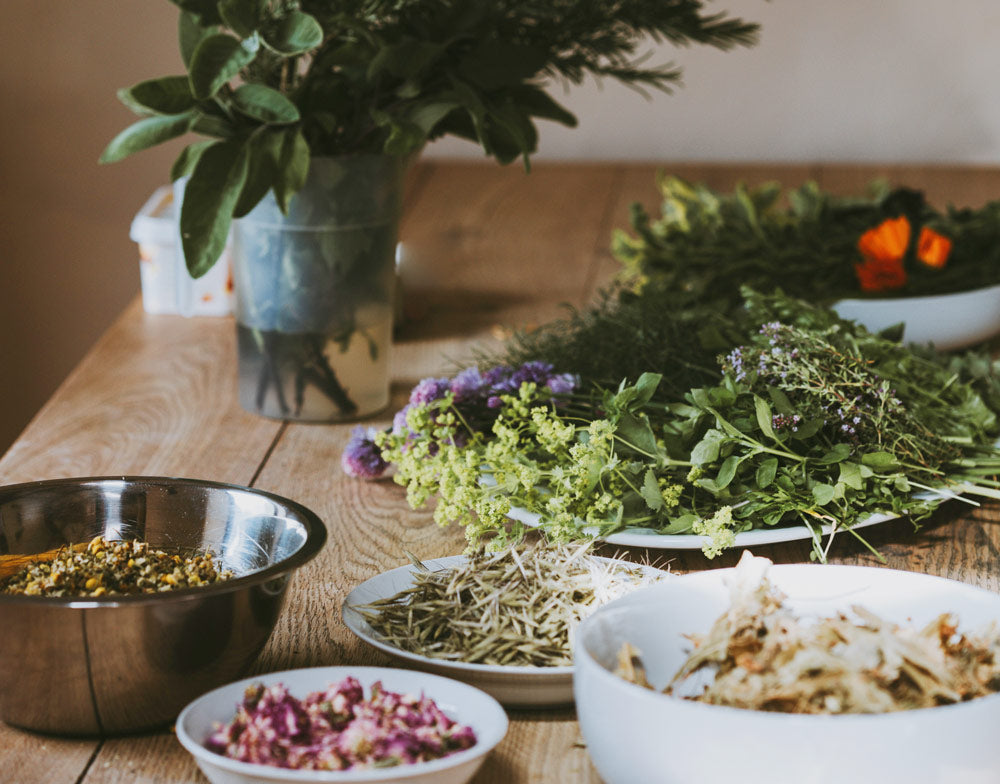 LIVE ONLINE CLASS <br> Herbs 101 <br> April 23rd, 2021