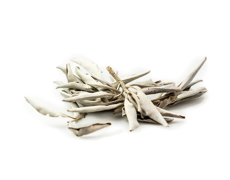 Sage Leaf, White (Ceremonial)