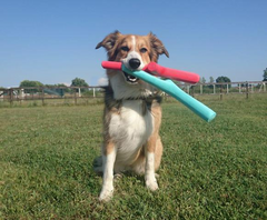 The Best Fetch Toy For Dogs