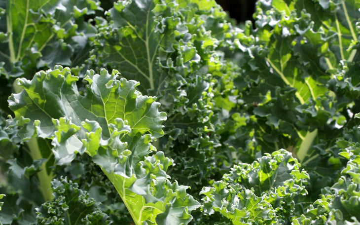 Kale is great for osteoporosis.  Well, I think it is, but I'm not a doctor.