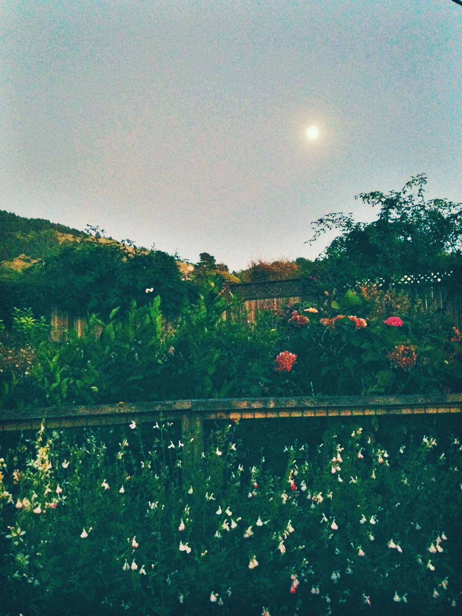 Dinner in the garden under the moon light at Parkside Cafe