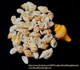 100g Shells For Resin Crafts ,Jewelry Mold Filling and Candle Making for the Beach effect