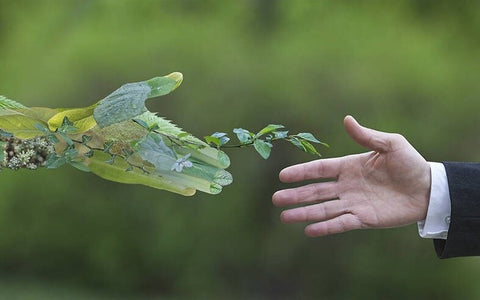 Environment - sustainable