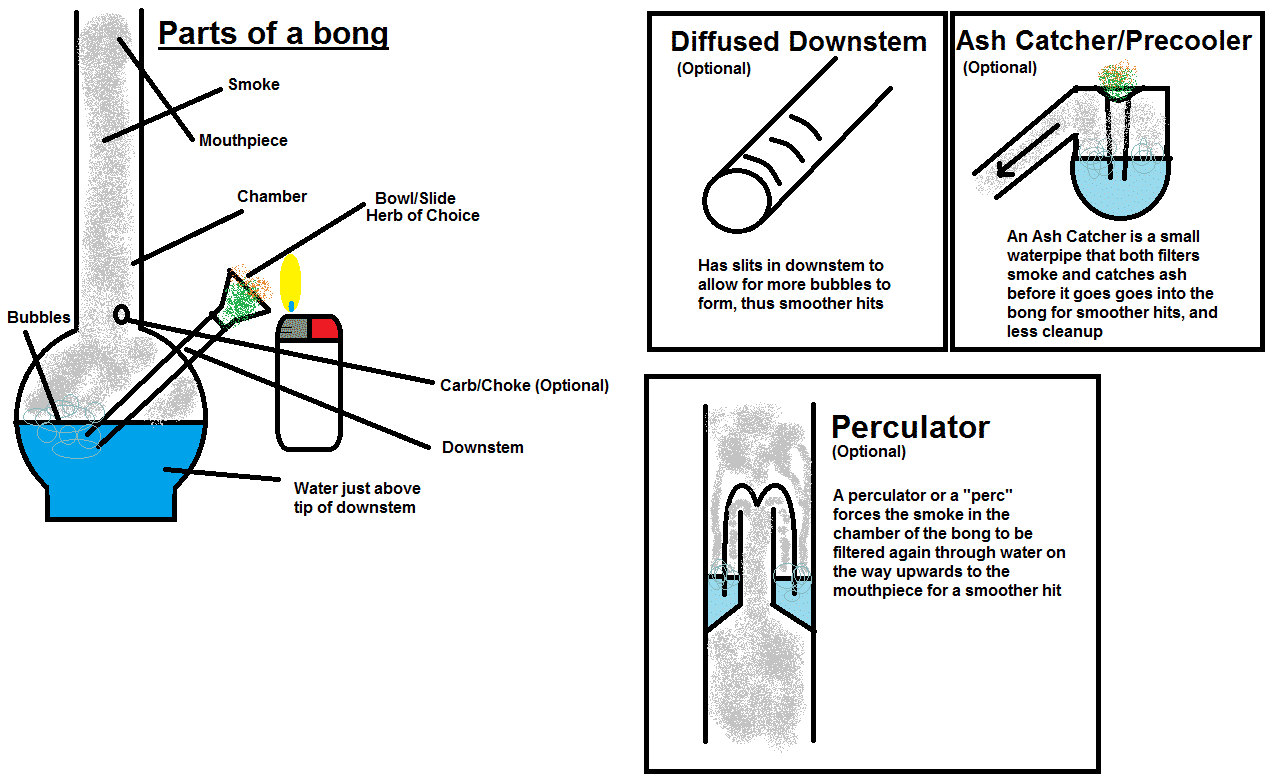 Picture of bong anatomy