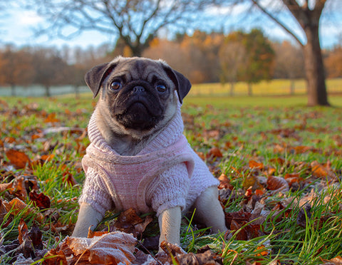 Autumn Dangers To Aware Of For Dogs