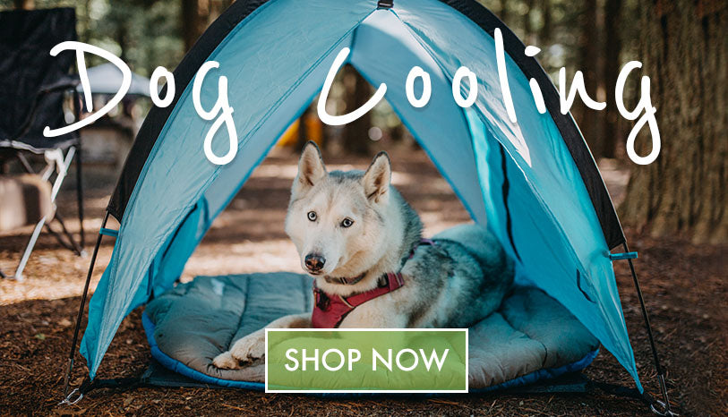 Not In The Dog House - Dog Cooling
