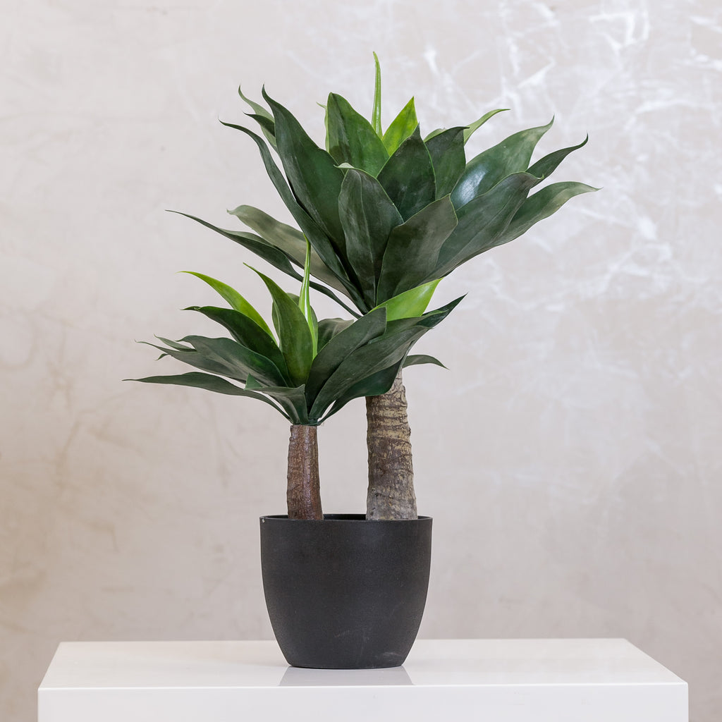 "Coco's Plantation 30"" Agave Plant in Pot - Casa Febus - Home • Design"