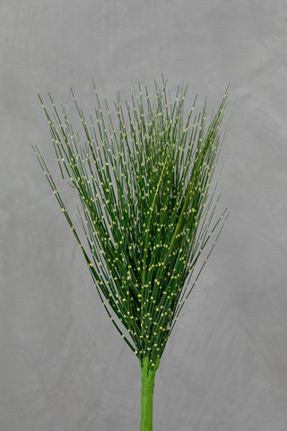 "19"" Grass Bush - Coco's Plantation"