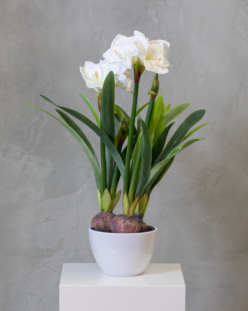 "32"" Amarillys Plant with White Flowers on Pot - Tropics Collection"