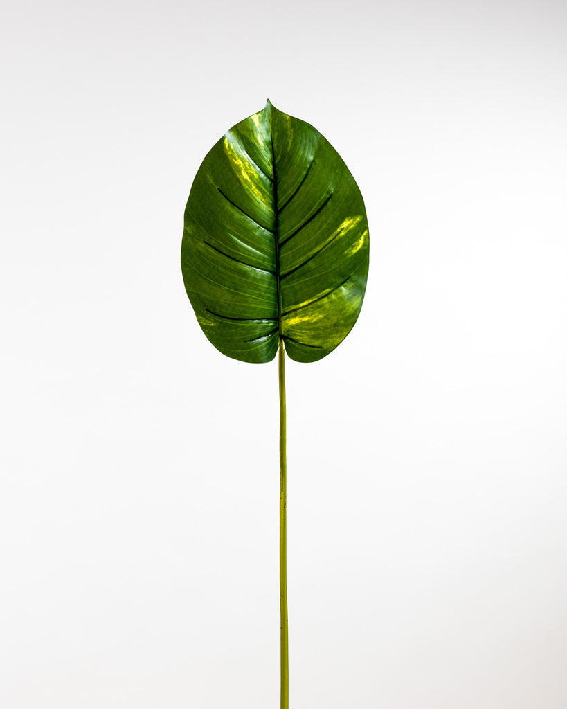 Pothos Leaf Green - Tropics Collection