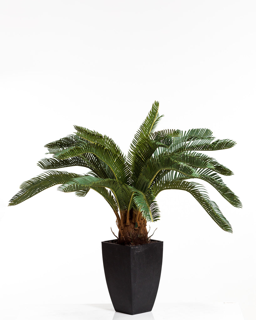 "28"" Sago Palm w/Pot - Coco's Plantation"