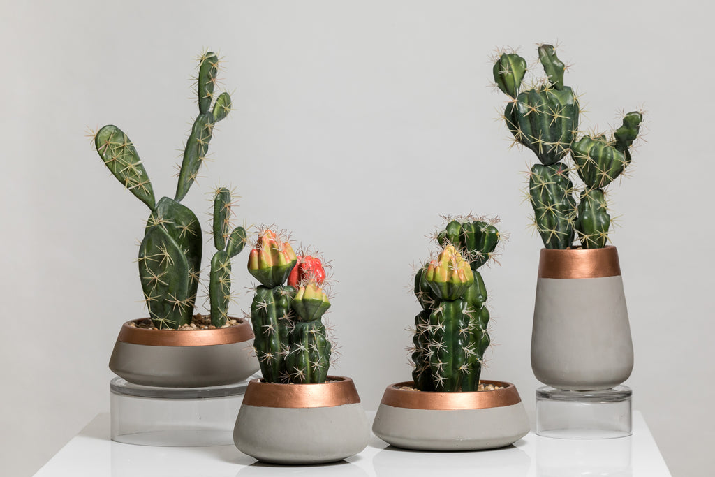"12"" Cacti Collection"