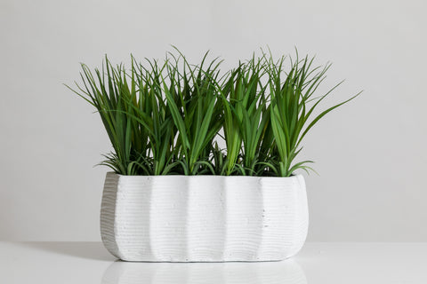 "9"" Grass in White Cement Pot - Cacti Collection"