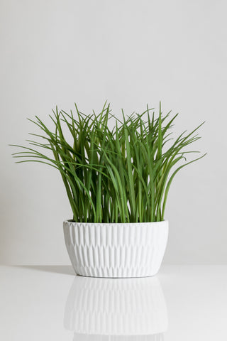 "14"" Grass in White Ceramic Pot - Cacti Collection"