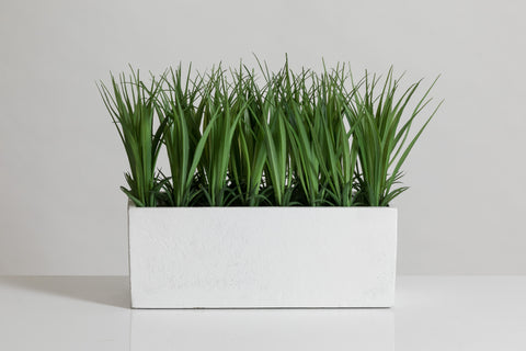"9"" Grass in White Paper Pot - Cacti Collection"