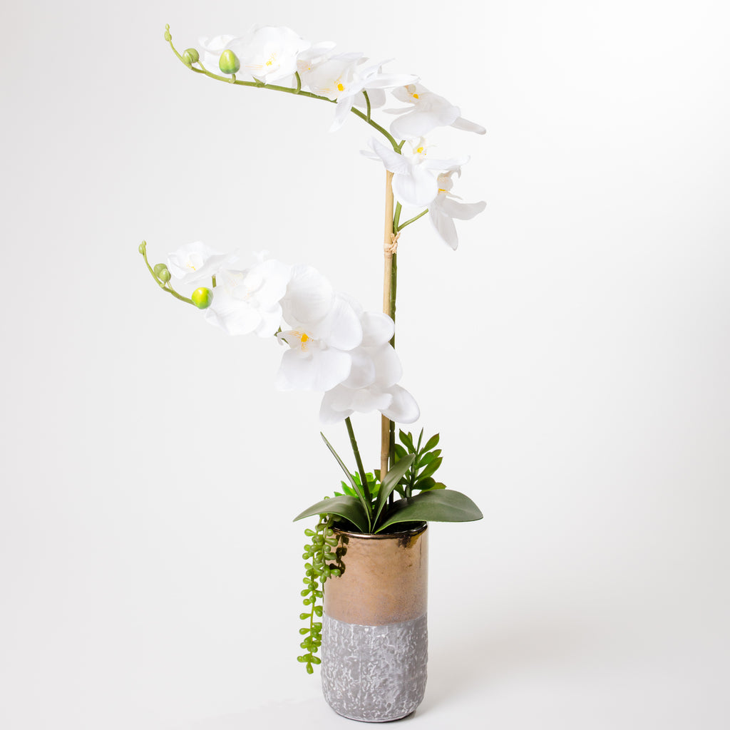 "26.5""  Orchid on Ceramic Pot - Cacti Collection"