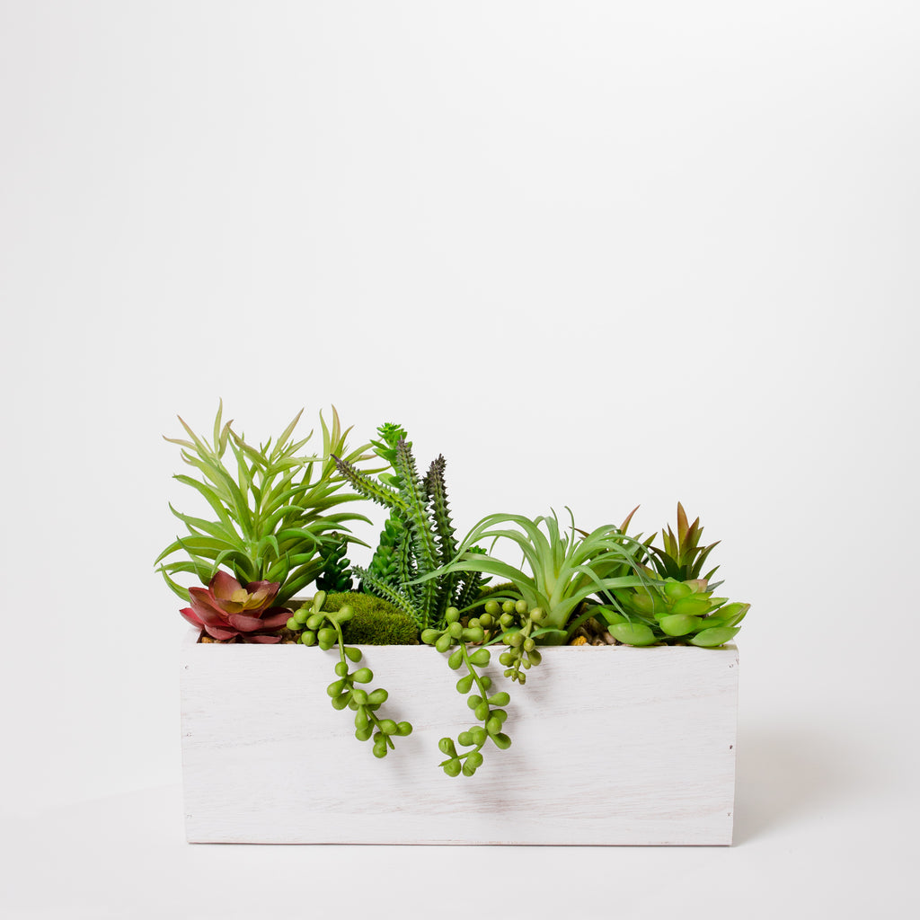 "9"" Succulent White Box - Cacti Collection"