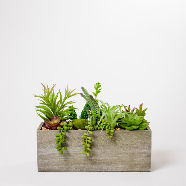 "9"" Succulent Wood Box - Cacti Collection"