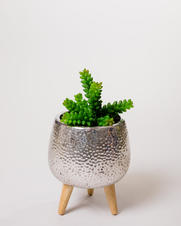 "7.5"" Green Succulent Stem - Cacti Collection"