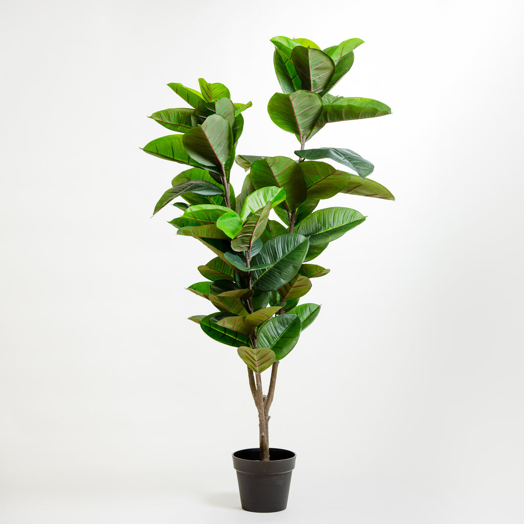 "59"" Rubber Tree on Pot"