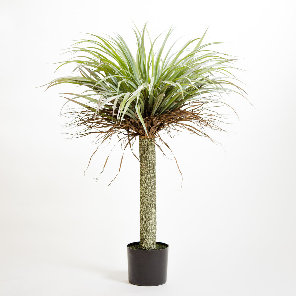 "41"" Yuca Plant on Pot"
