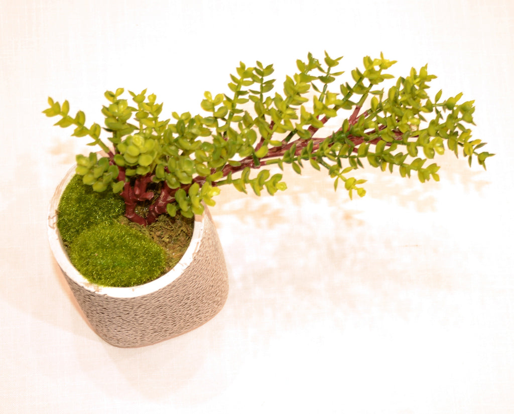 Grand Du Pot Bonsai A - Casa Febus - Home • Design