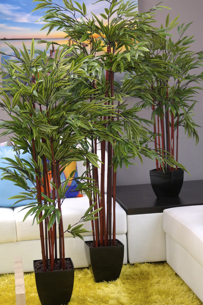 Coco's Plantation 5' Bamboo Plant in Pot - Casa Febus - Home • Design