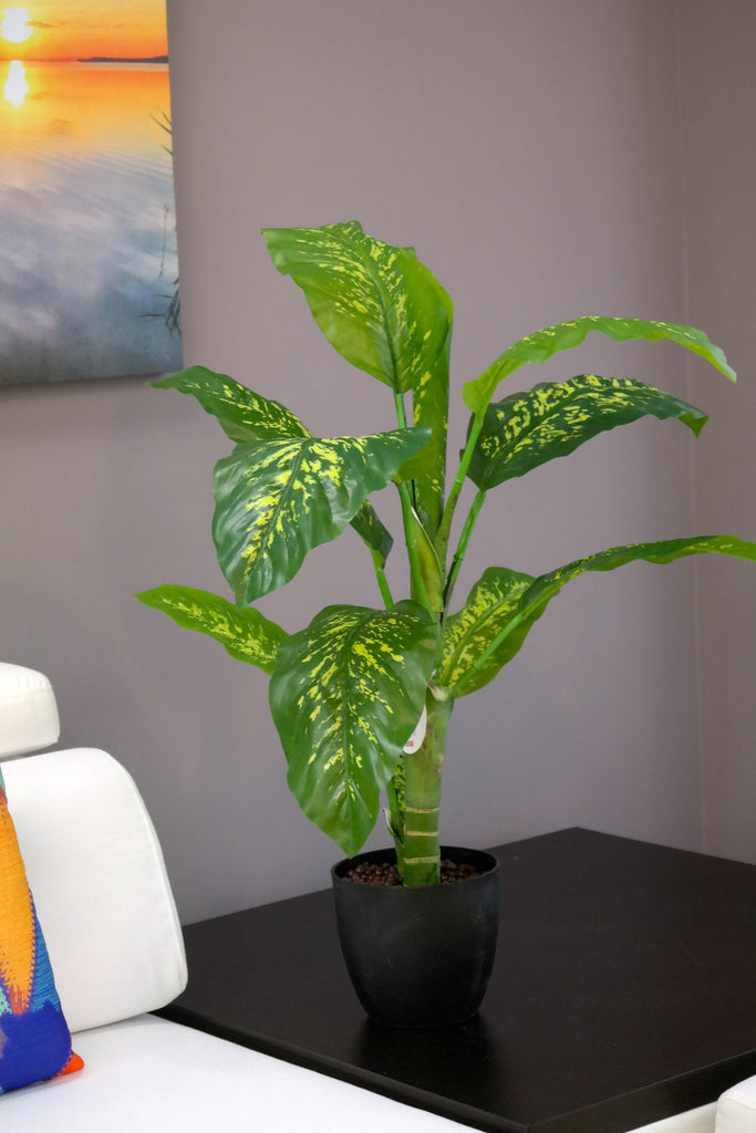 Coco's Plantation 3' Dieffenbachia Plant in Pot - Casa Febus - Home • Design