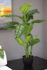 Coco's Plantation 4' Dieffenbachia Plant in Pot - Casa Febus - Home • Design