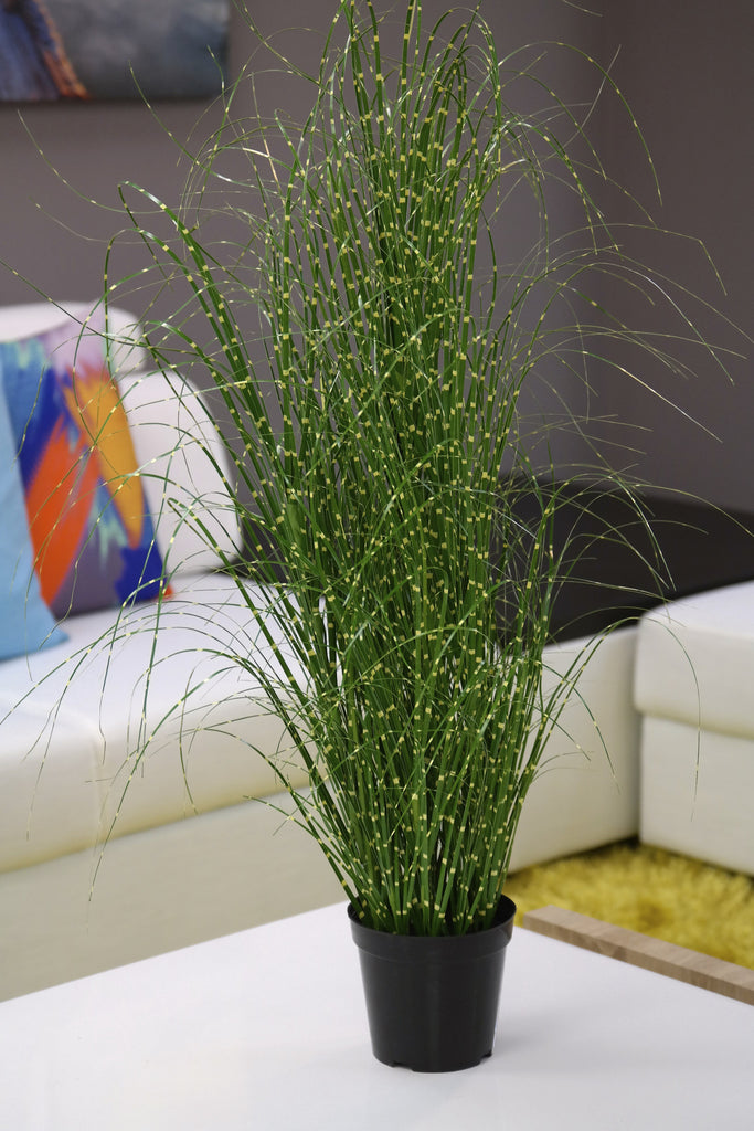 "Coco's Plantation 37"" Zebra Grass in Pot - Casa Febus - Home • Design"