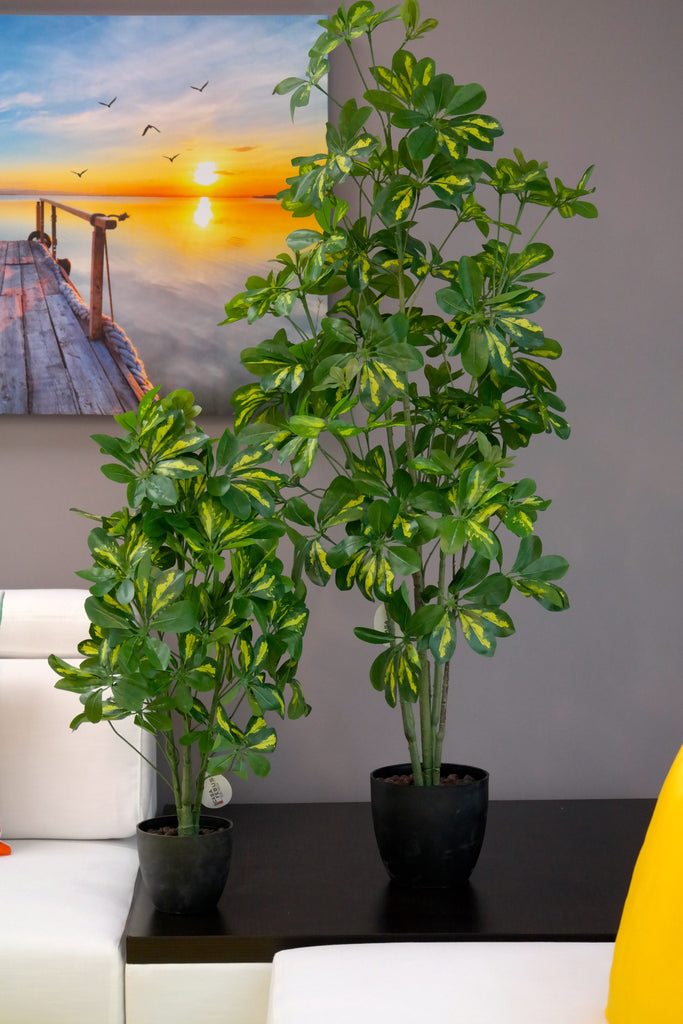"Coco's Plantation 32"" Baby Schefflera Plant in Pot - Casa Febus - Home • Design"