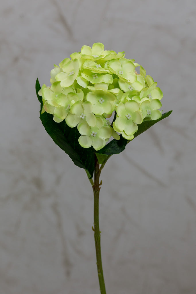 "14"" Hydrangea Stem - Green - Casa Febus - Home • Design"