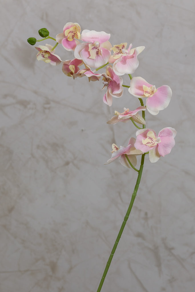 "34"" Phalaenopsis Orchid - Pink - Casa Febus - Home • Design"