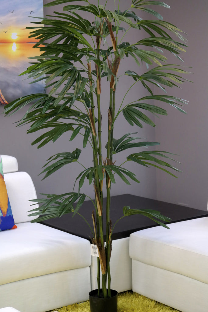 Coco's Plantation 6' Raphis Palm in Pot - Casa Febus - Home • Design