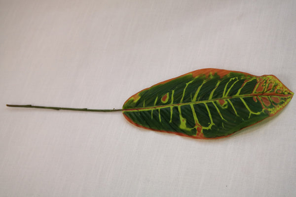 "Coco's Plantation 21"" Croton Leaf. Assorted - Casa Febus - Home • Design"