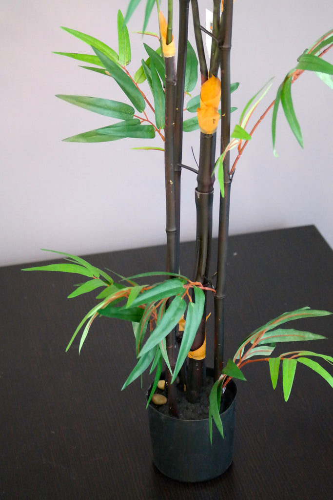 Coco's Plantation 5' Japanese Bamboo Tree - Casa Febus - Home • Design